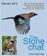 stonechat-feb16-thumb